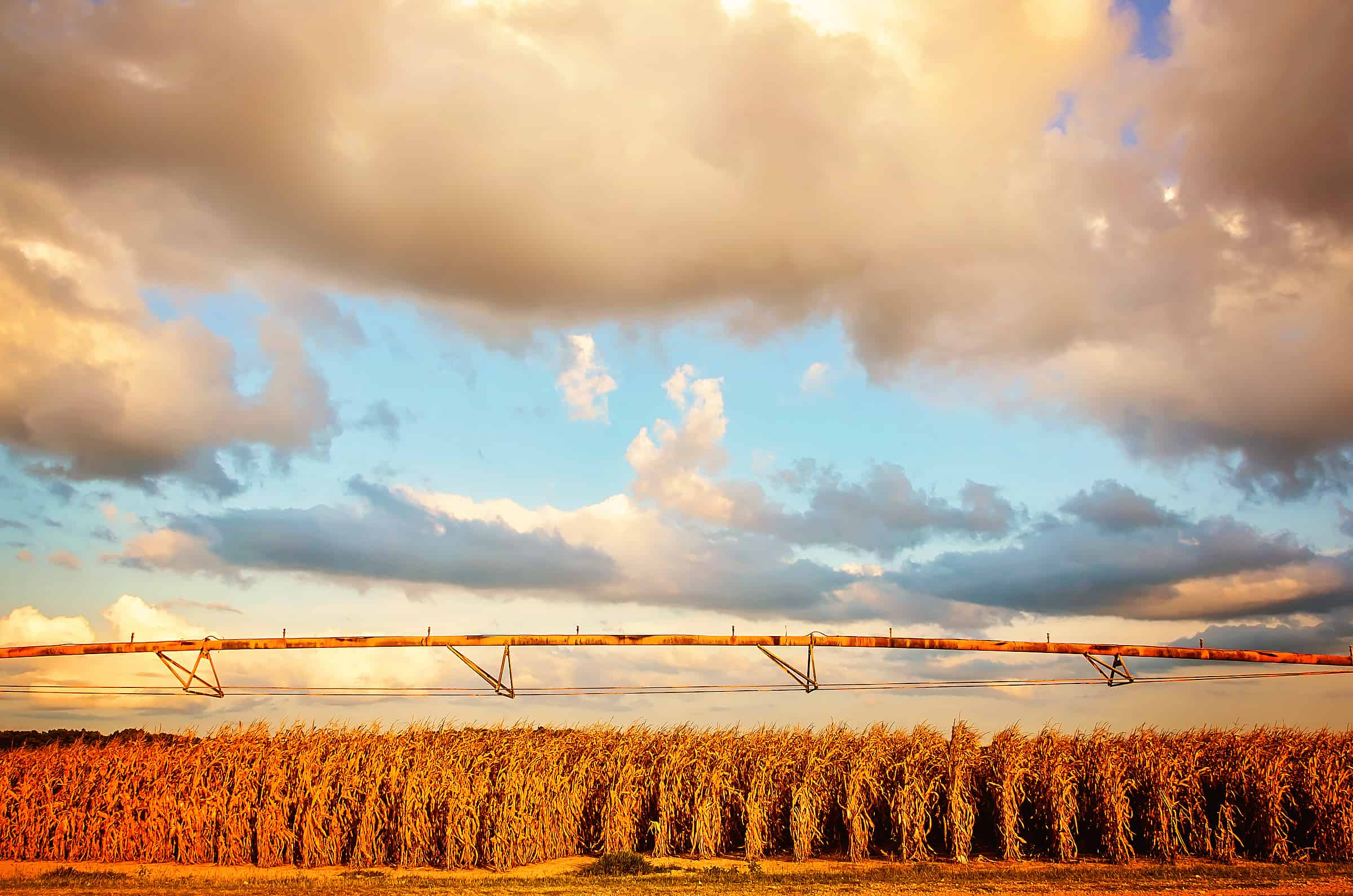 Cumulus clouds over a corn field in Greenwood, Mississippi