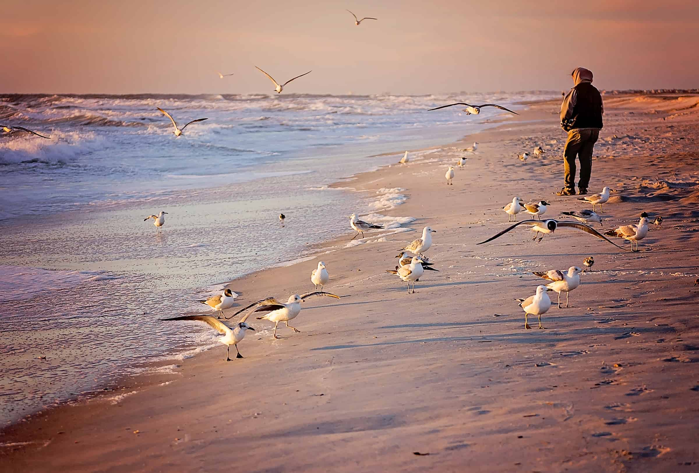 Tourist feeds birds at sunrise in St. Augustine, Florida